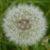 Profilbild von Leseratte