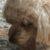 Profilbild von Benita von Tiedemann
